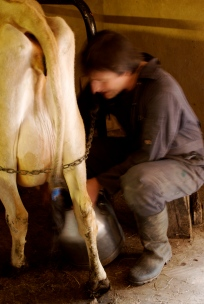 Milking time