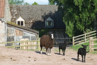 Animals at Trealy Farm