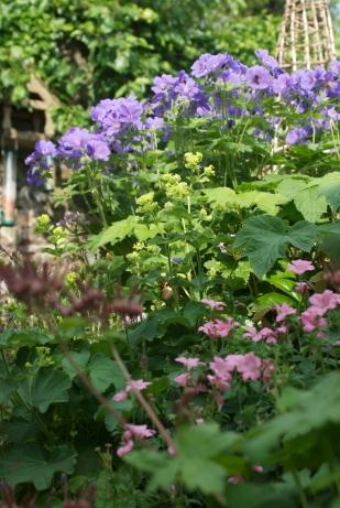 Our City Garden