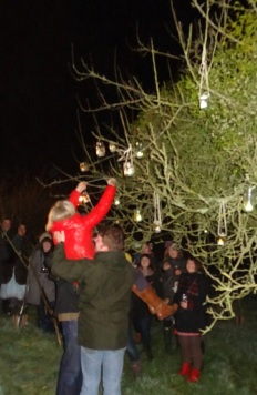 The light-footed Queen being hoisted up the apple tree.