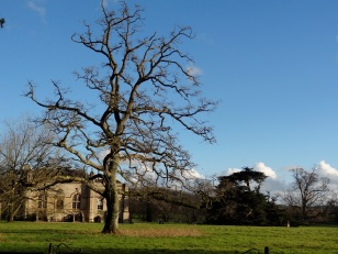 Lacock and winter skies