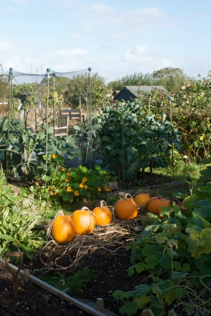 Autumnal Allotment Jenny Chandler