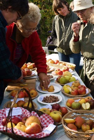 Tasting Apple Varieties - Jenny Chandler