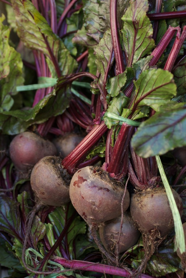 Jenny Chandler Beetroot
