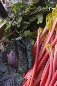 Reg the Veg Cabbage and Rhubarb