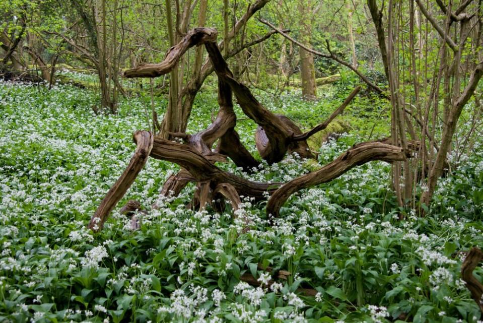 Jenny Chandler Priors Wood