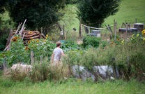 Matt in the kitchen garden